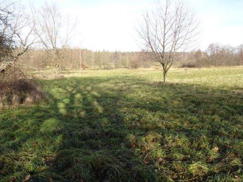 Zielona polana z drogą asfaltową 5