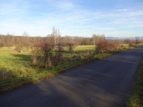 Zielona polana z drogą asfaltową 1
